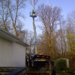 elevated tree removal