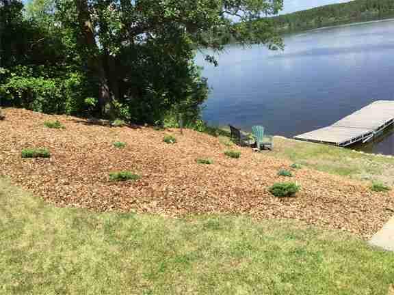 riverbank stabilization Junipers and mulch